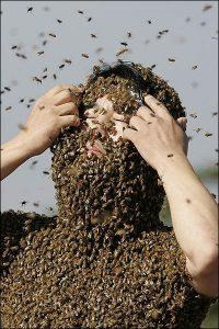 La picadura de la abeja africana, síntomas y tratamiento