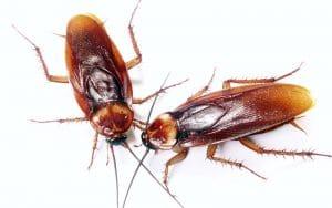 5 ejemplos de insectos y las cucarachas