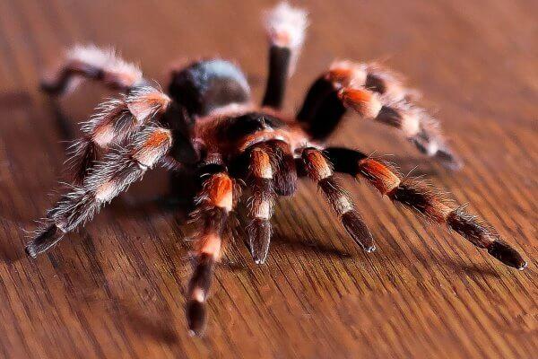 4 formas de tratar una picadura de araña