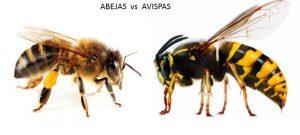 el aguijon de la abeja o de la avispa1