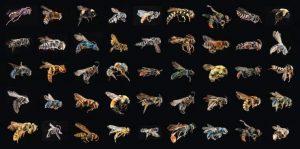 el aguijon de la abeja o de la avispa4