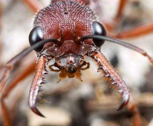 acido del piquete de la hormiga 6