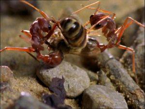 acido del piquete de la hormiga 8