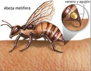 el aguijon de la abeja 3