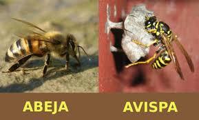 el aguijon de la abeja8