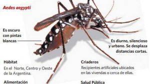 El Aedes aegypti y sus caracteristicas
