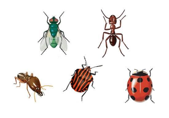 Examples Of Insectivores tipos de insectos que ...