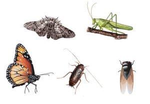 Conoce los tipos de insectos que existen y sus características