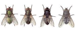 Los insectos juegan un gran papel en las funciones del ambiente