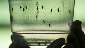 Criaderos de zancudos del chikungunya