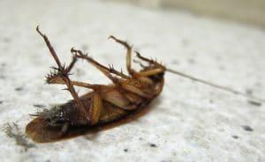 Eliminar las cucarachas en casa