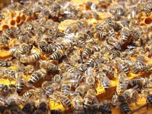 Las alergias a las picaduras de abejas