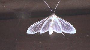 Las mariposas son llamadas espiritrompa, debido a que poseen un aparato bucal