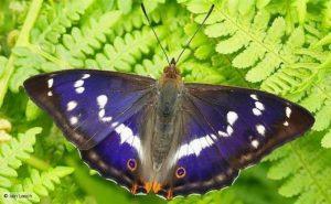Nombres de mariposas comunes, los insectos más bellos y especiales