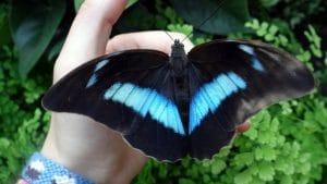 Las mariposas son esos encantos llenos de magia