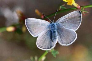 palos verde azul es una de las especies más exóticas del mundo