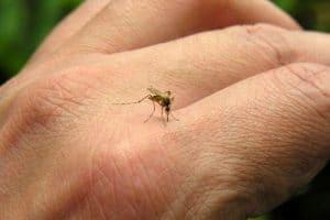 alergia-a-piquetes-de-insectos-4
