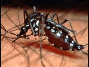 alergia a piquetes de mosco