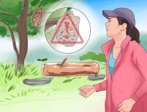 alergias por picaduras de insectos 6
