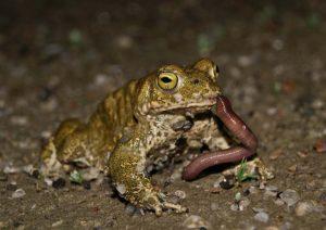 animales-que-comen-insectos-como-se-llaman-7