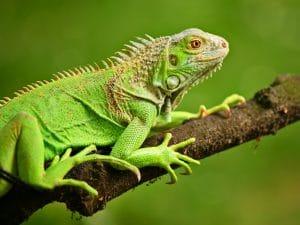 Animales que comen insectos como se llaman