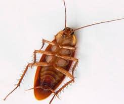 aparecen cucarachas muertas en casa patas arriba