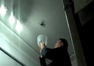 arañas caseras venenosas 8