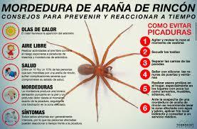 araña de rincon argentina