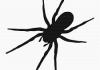 arañas venenosas y no venenosas descúbrelas todas ya mismo