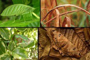 caracteristicas de la mariposa 12