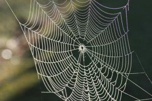 caracteristicas de la tela de araña 2