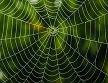caracteristicas de la tela de araña 1