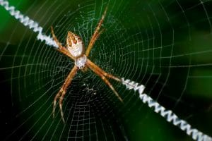 caracteristicas de la tela de araña 5