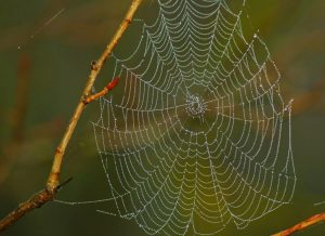 caracteristicas de la tela de araña 6