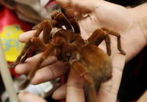 caracteristicas de las arañas