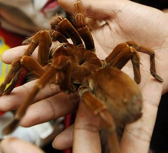 Caracteristicas de las arañas: una trivia arácnida imperdible