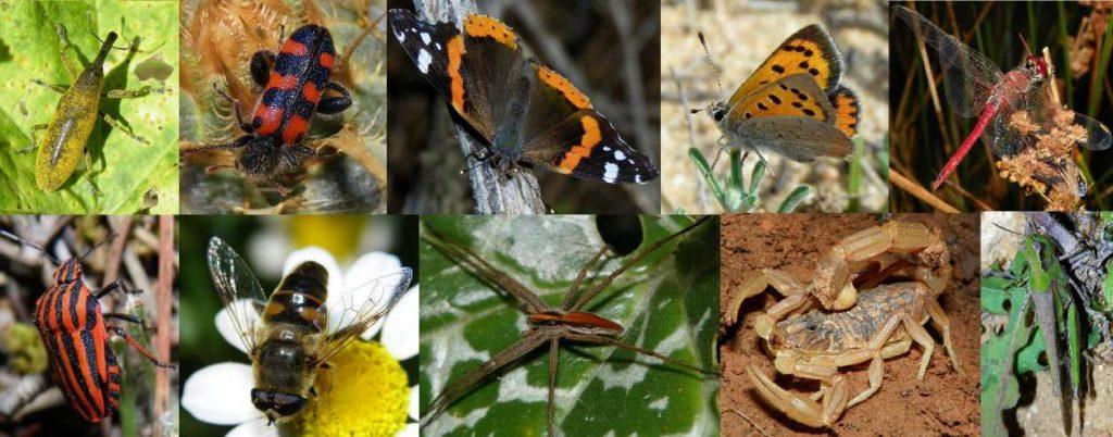 caracteristicas de los insectos