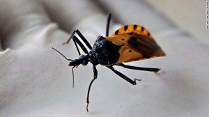 La enfermedad de chagas es transmitida a través de insectos.