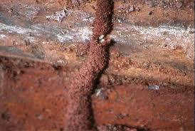 Las termitas de madera: