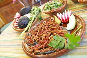 como-comer-gusanos-fritos-7