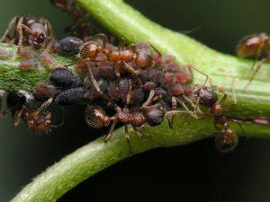 como-conseguir-hormiga-reina-5