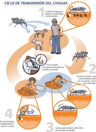 A través de algunos exámenes se detecta rápidamente esta enfermedad