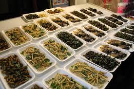 Venta de insectos comestibles