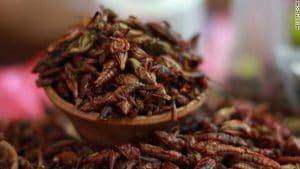 recetas para preparar chapulines comestibles