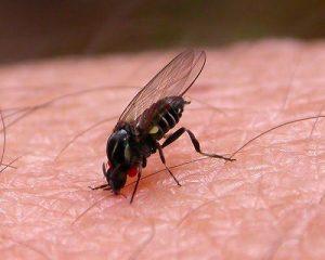 mosca que pica