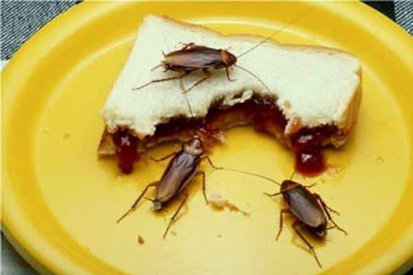 Enfermedades-por-cucaracha4