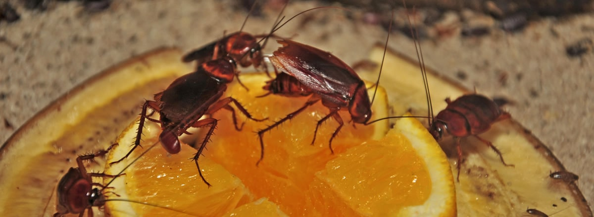 Enfermedades-por-cucaracha5