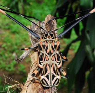 Escarabajo arlequín: Todo lo que deberías saber de este insecto