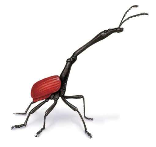 Escarabajo-jirafa4