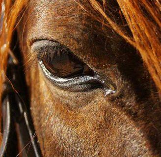 Garrapatas en caballos: Todo lo que debes saber